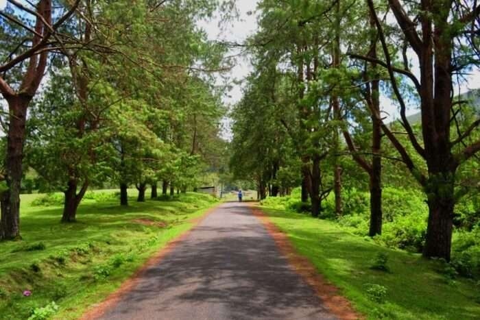 How To Reach Silent Valley National Park by road