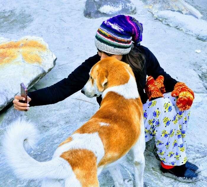 mountain dog in kheerganga