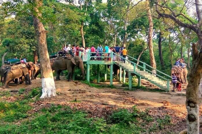jungle trek in tirthan