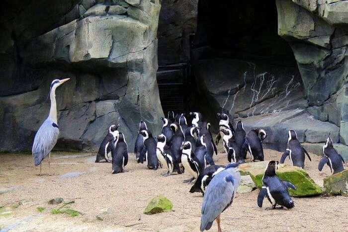 Meet giraffes & camels at the Amsterdam Zoo - penguins