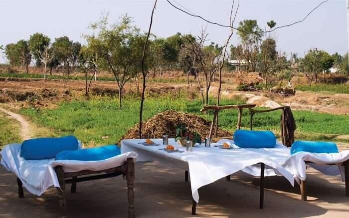 Open field breakfast in Lakshman Sagar Resort