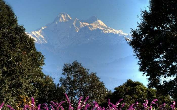 Majestic Himalayan View from the forest of tall English trees, Ranikhet