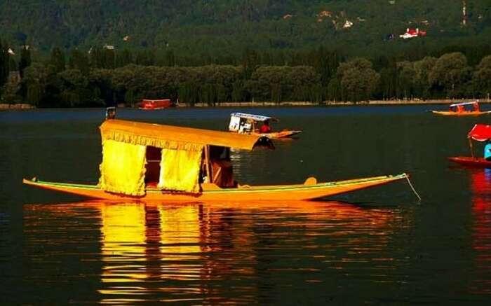 Shikara ride with your better half on the Dal Lake Srinagar