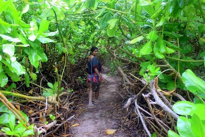 way to Petite Anse