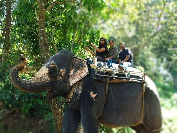 Chillithodu Elephant ride in kerala