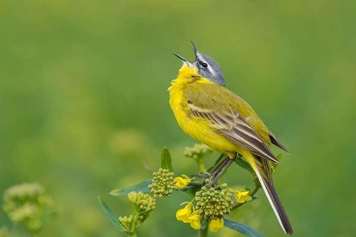 Migratory Birds of sultanpur bird sanctuary
