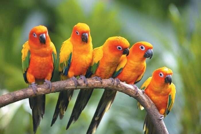 Sultanpur Bird Sanctuary Timings