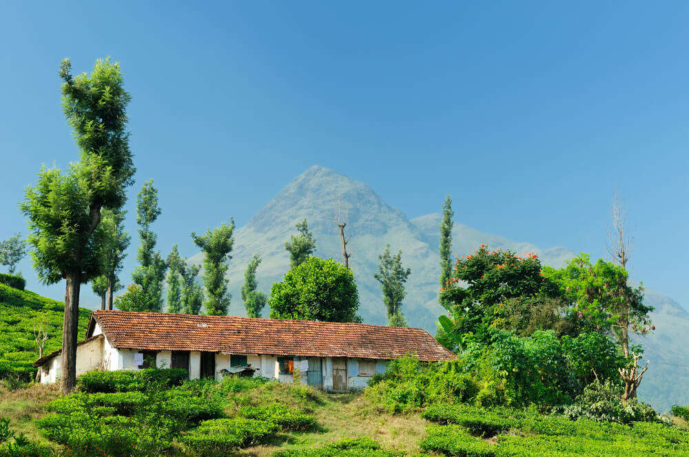 a traditional style house in lush valleys of Wayanad