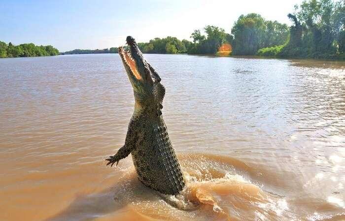 Crocodile Cruise In Adelaide