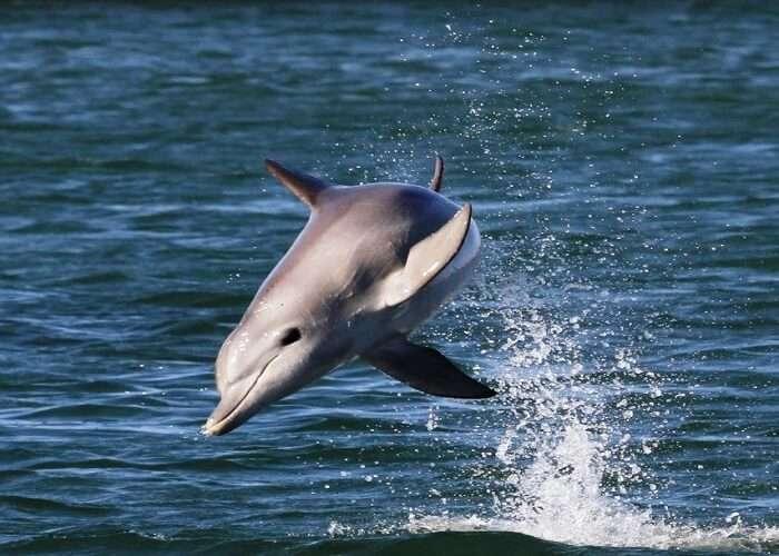 Dolphin Watching In Glenelg