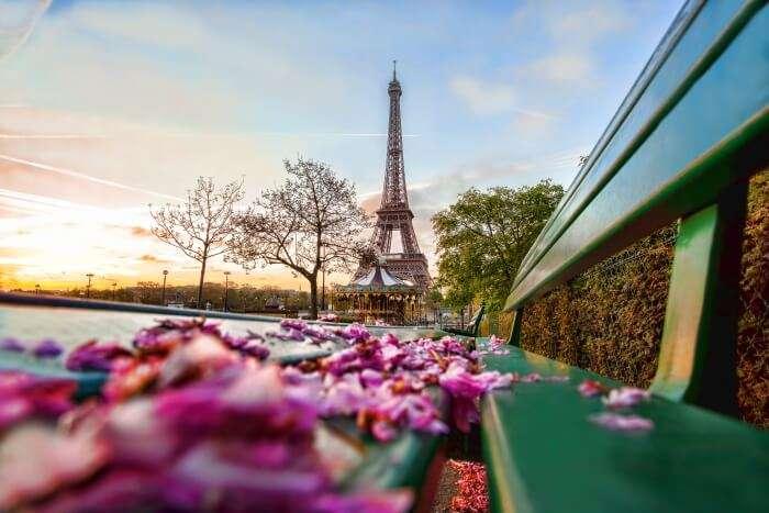 Eiffel blossom