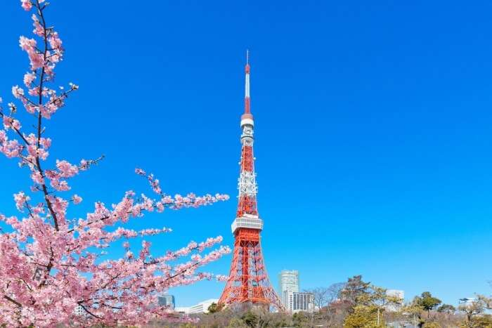 Tokyo Tower during the cherry blossom