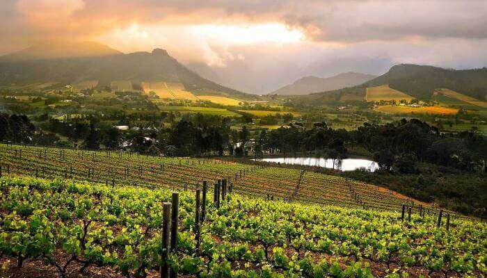 Cape-winelands_22nd oct