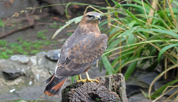 Witness the rich wildlife and birdlife