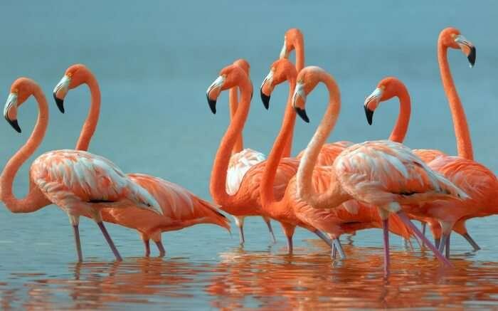 acj-0702-flamingo-sanctuary-mumbai (1)