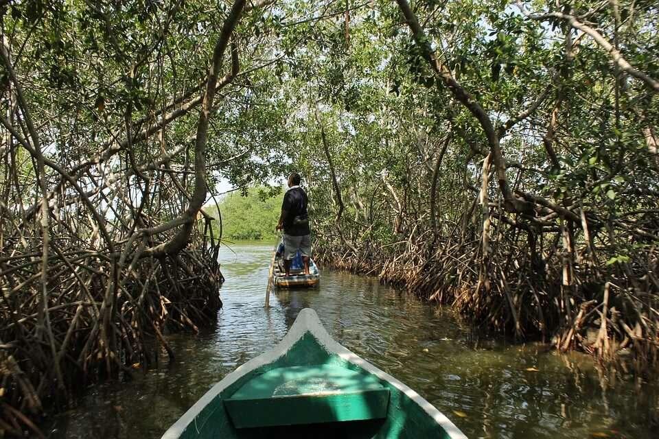a boat ride through mangrove