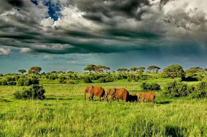 Elephants at tarangire national park Tanzania