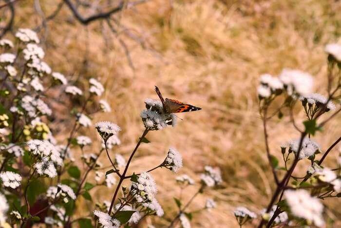 Binsar Wildlife Sanctuary butterfly