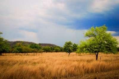 Chandoli National Park Review