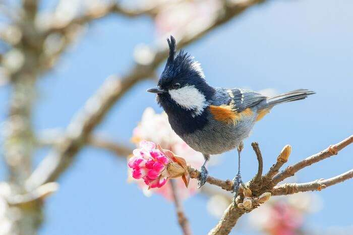 Binsar Wildlife Sanctuary bird
