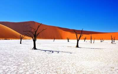 a gorgeous mix of white and golden desert