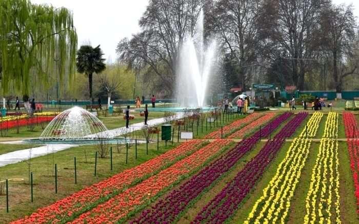 acj-2803-kashmir-tulip-garden (3)