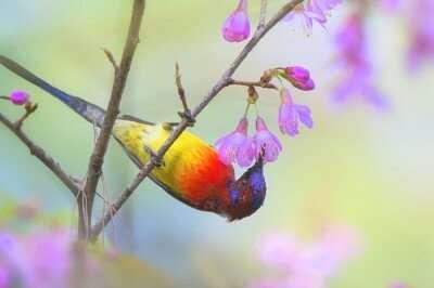 binsar wildlife sanctuary cover picture