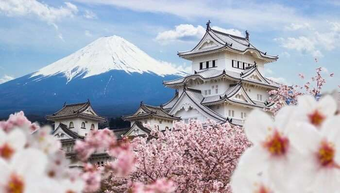 japan mount fuji and cherry blossoms