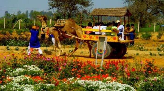 pratapgarh farms
