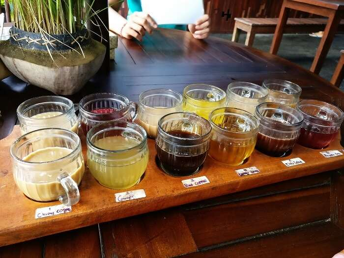 Tea tasting tour in Bali