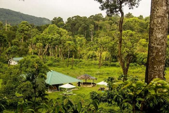 Enjoy camping under the stars coorg