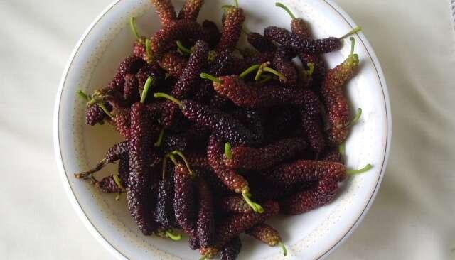 Mulberry Khomcha