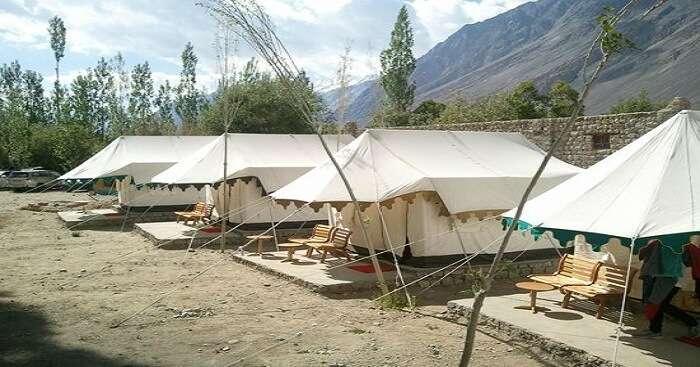acj-2404-camping-in-leh (8)