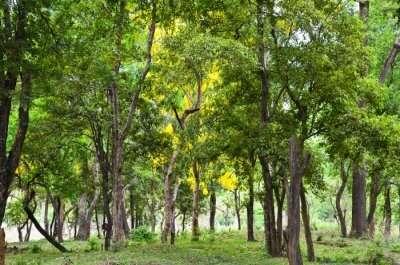 forests trekking