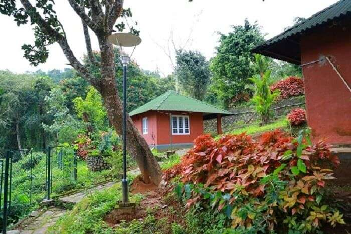 beauty of the western ghats