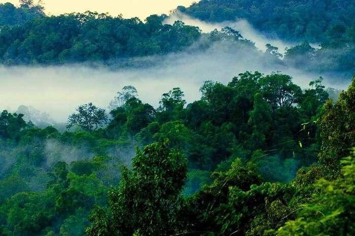 visit Nelliyampathy Hills palakkad