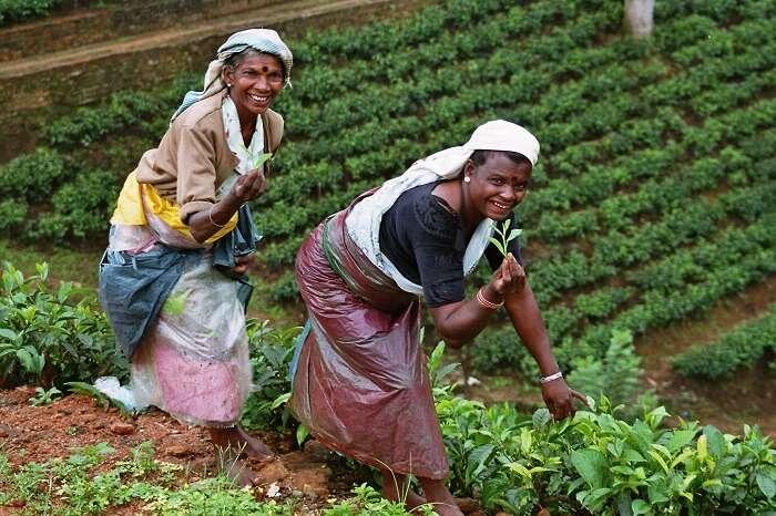 Ceylon Tea Factory