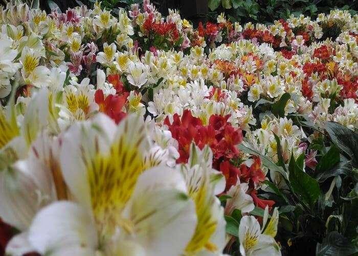 flower exhibitions gangtok