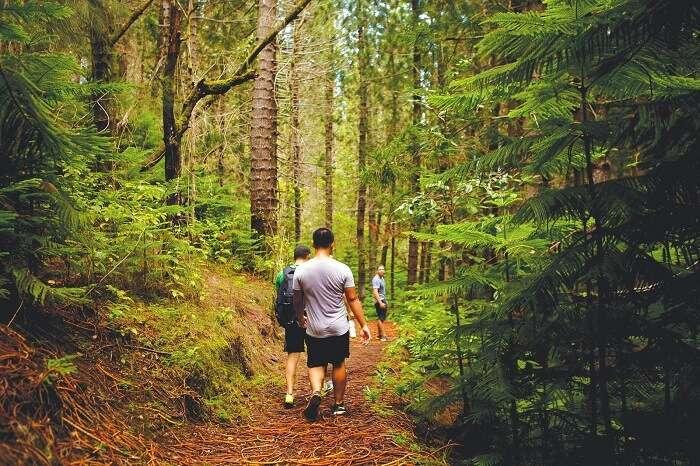 Go hiking in Bora Bora's valleys & mountains
