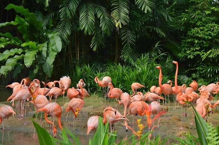 anshu singapore trip: flamingos