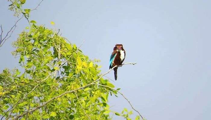 Khijadiya Bird Sanctuary