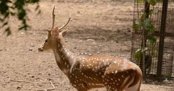 variety of rare animals in zoo