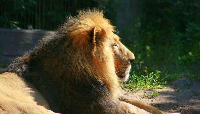 sakkarbaugh zoo