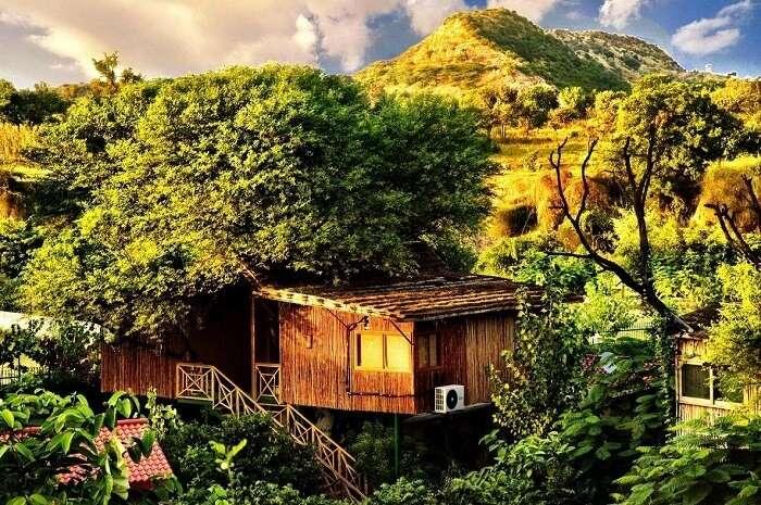 Tree House Resort Jaipur