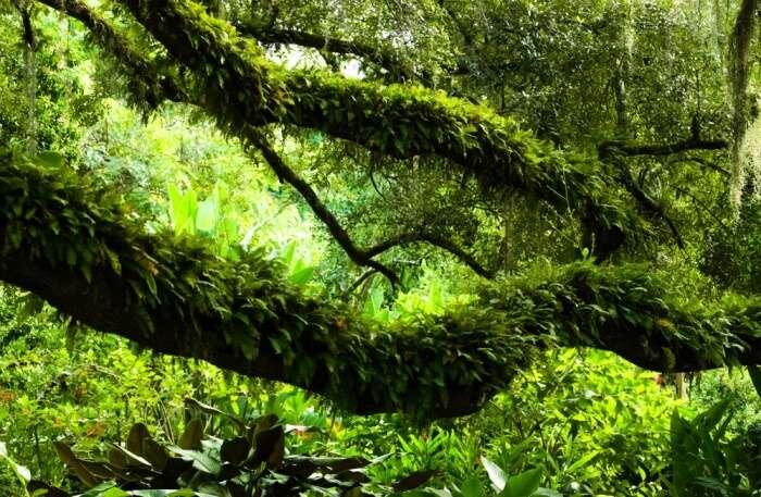 lush gardens of Orlando