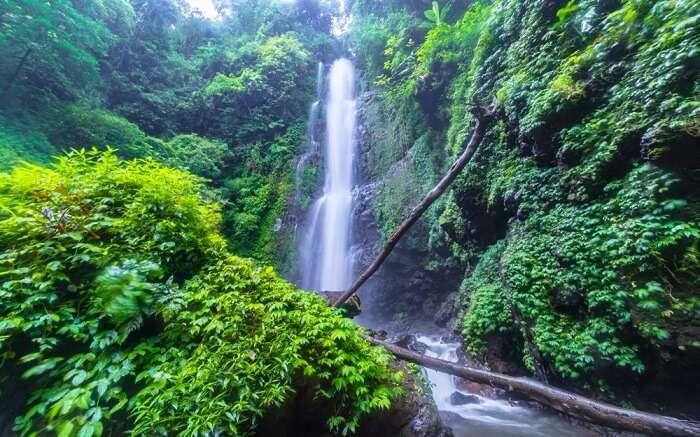 a beautiful waterfall amid foliage