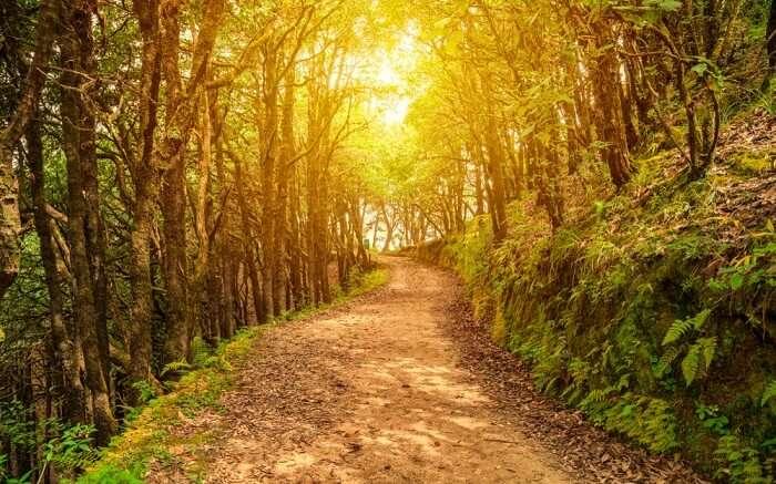 a muddy trail through the jungles of Binsar