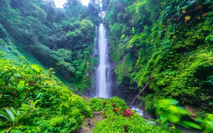 a tall waterfall in the middle of a thick forest