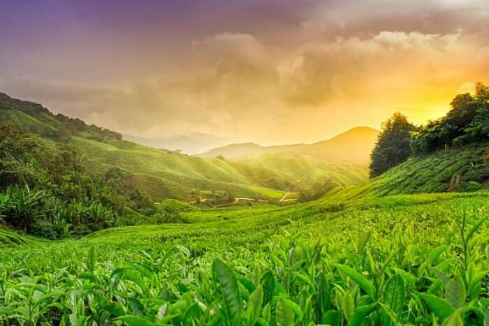 cameron highlands sunset