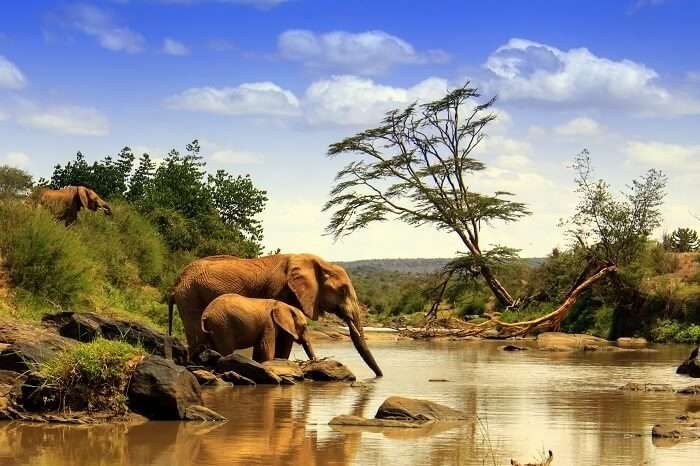 kenya national park elephants cover